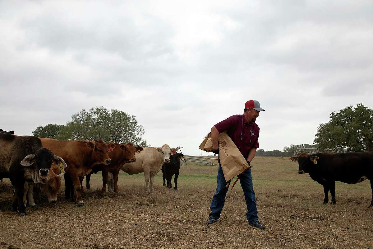 Boening puts cubes out for cows to eat at his farm near Floresville. Last year, Texas agricultural producers shipped just $539 million in farm products to the economic giant. Through the first six months of this year, Texas already has exported $709 million in agricultural goods to buyers in China.