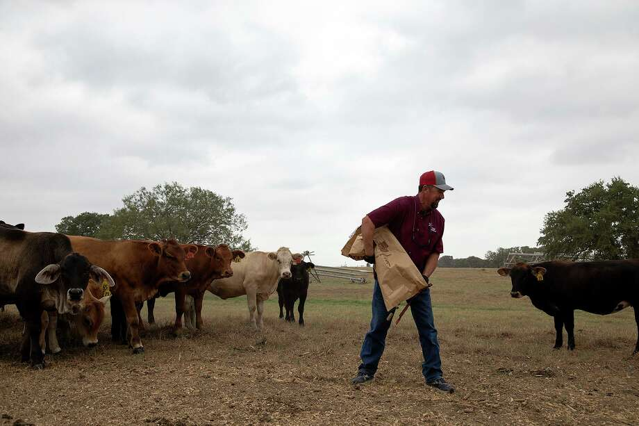 Boening puts cubes out for cows to eat at his farm near Floresville. Last year, Texas agricultural producers shipped just $539 million in farm products to the economic giant. Through the first six months of this year, Texas already has exported $709 million in agricultural goods to buyers in China. Photo: Lisa Krantz /Staff Photographer / San Antonio Express-News