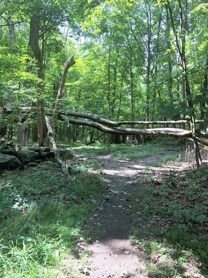 The McManus section of West Mountain Refuge had extensive damage caused by Tropical Storm Isaias, including a tree across one of the trails maintained by the Conservation Commission. Photo: James Coyle / Ridgefield Conservation Commission / James Coyle