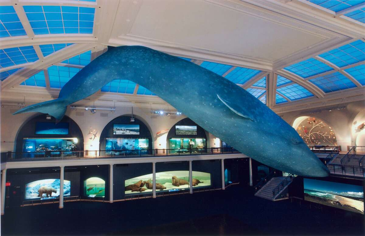 REOPENING: The Hall of Ocean Life will be a popular place again when the American Museum of Natural History in New York City reopens its doors to the general public on Wednesday, Sept. 9, after a long COVID-caused shutdown. Advance ticket reservations are required and are available on amnh.org or through the Museum's Explorer app.