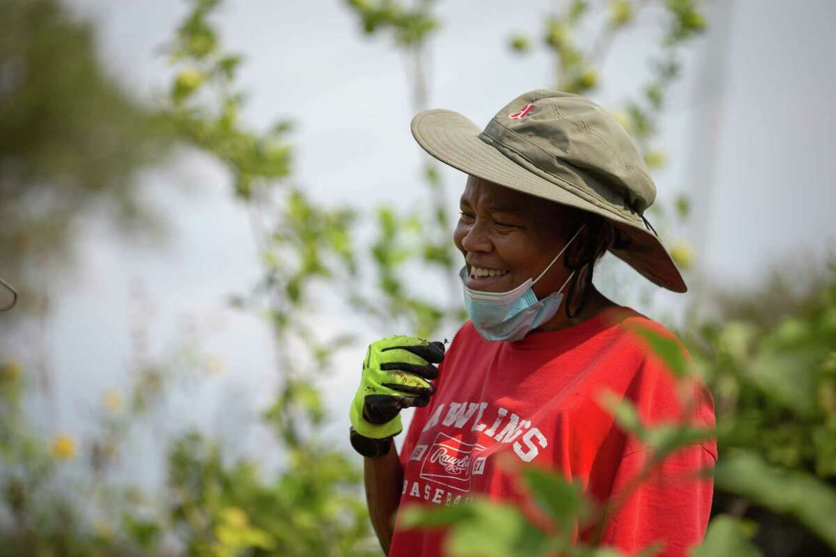 Dr. Sheri Smith is a professor of Urban Planning and Environmental Policy at Texas Southern University and board member of Blodgett Urban Gardens. Her students first came to her with the idea of starting a community garden in an empty lot owned by TSU over five years ago.