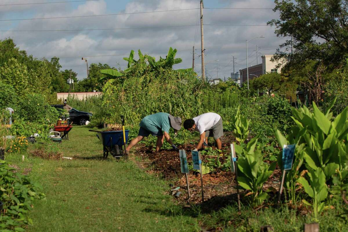 Blodgett Urban Gardens was first created over five years ago by students at Texas Southern University as a way to help diminish the issue of food insecurity in Third Ward.