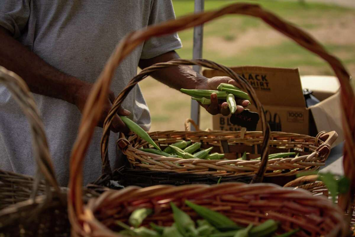 Customers pick through the large harvest of fresh okra at the Blodgett Urban Gardens' food stand.