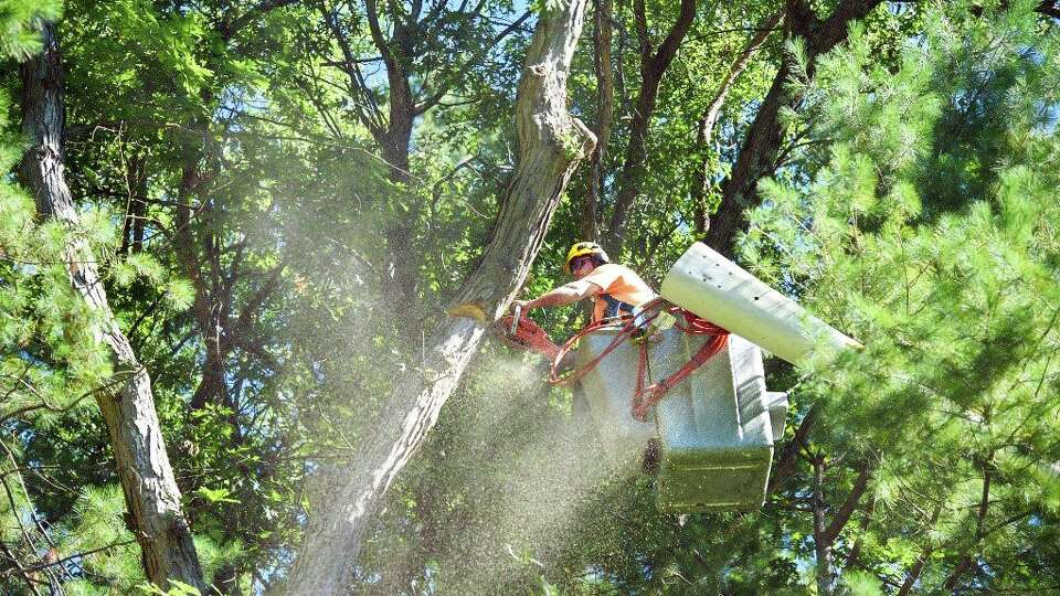 Eversource paid $120,000 after a tree trimming 'error.' Years later, the same challenges remain.