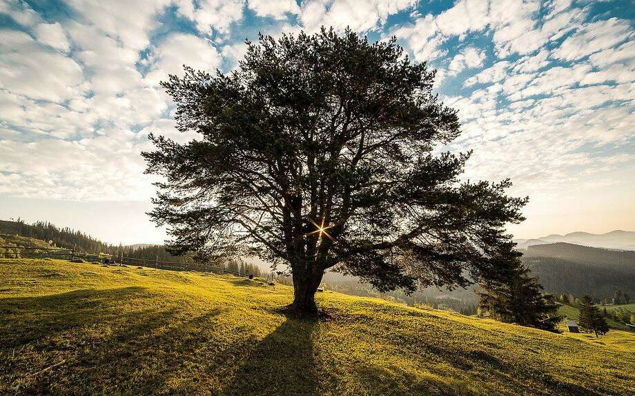 Trees can act like compasses if you know what to look for. Careful observation of branches can help find north and south. Photo: Contributed Photo / Woodcock Nature Center / Wilton Bulletin Contributed