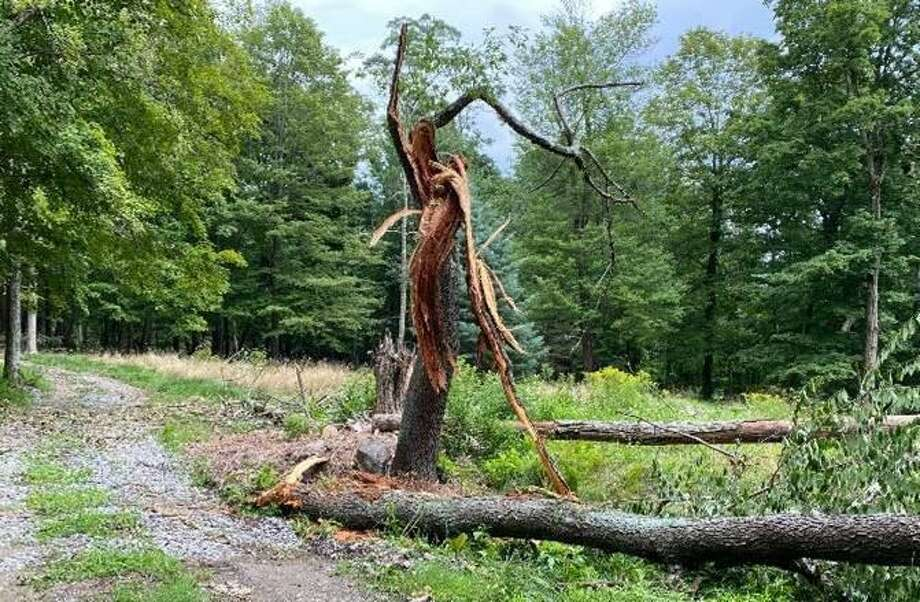 Tropical Storm Isaias damaged many trees, primarily black locusts, at Deer Pond Farm, the nature sanctuary owned by the Connecticut Audubon Society in Sherman. Photo: Contributed Photo / Cathy Hagadorn
