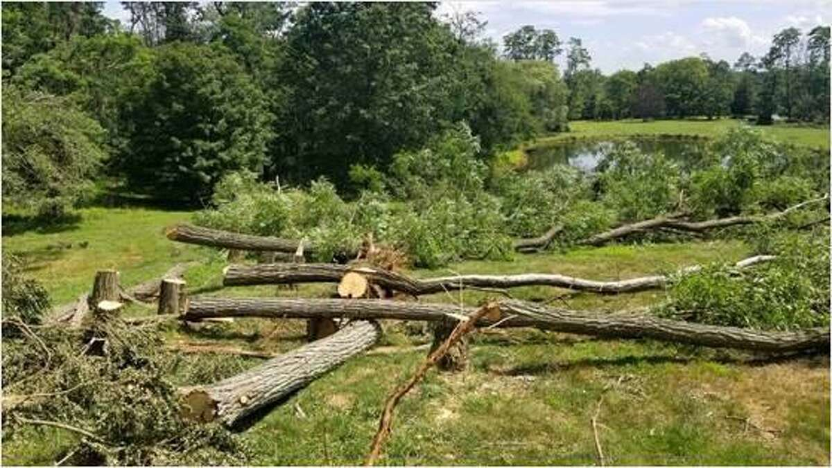 Trees felled by Tropical Storm Isaias created open spaces for other species at Deer Pond Farm in Sherman.