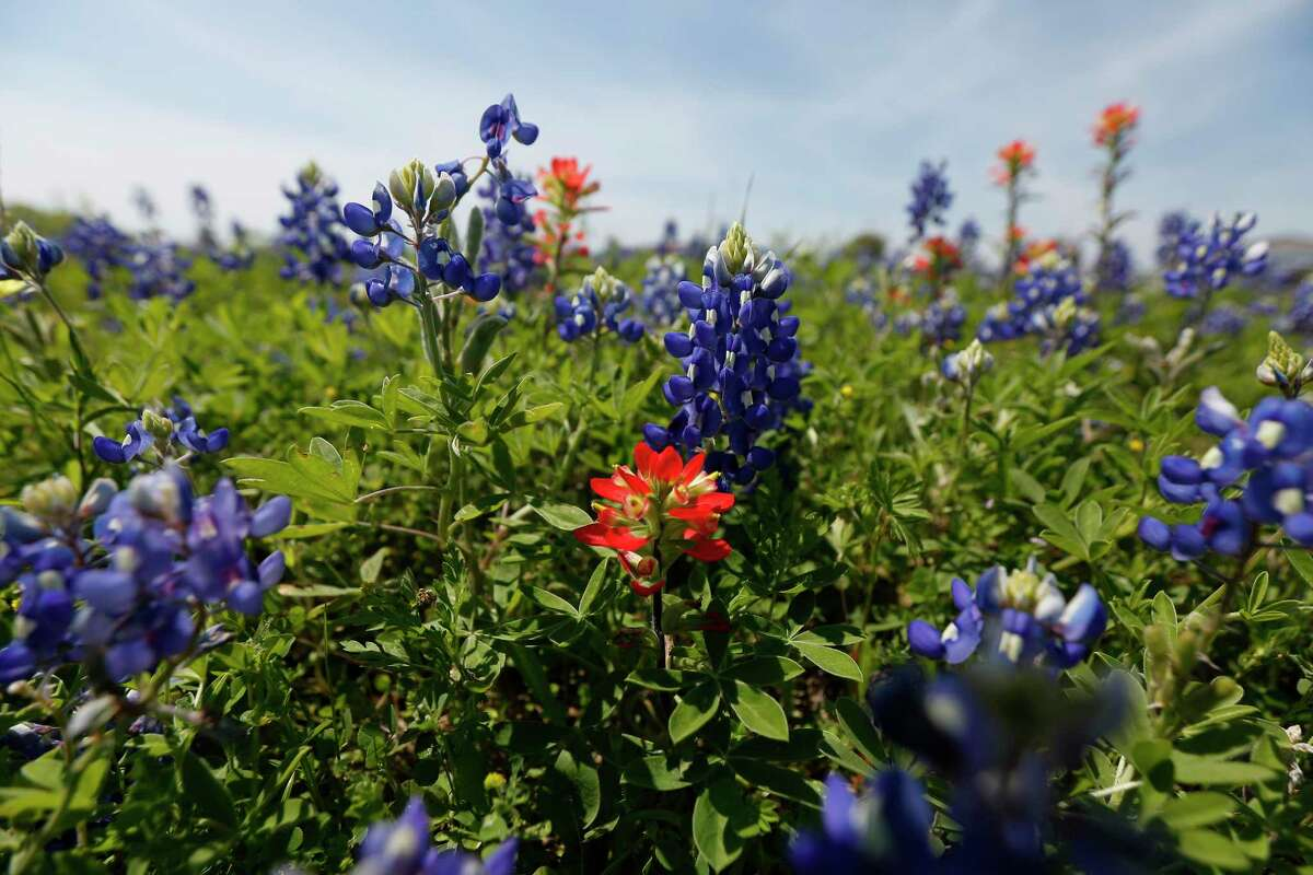 Plant wildflower seed now for spring and summer blooms.