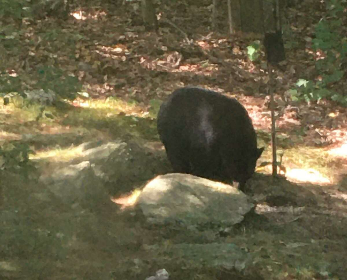 This bear stopped to enjoy a snack at an Old Stratford Road home at 11:30 p.m. on Friday, Sept. 4.