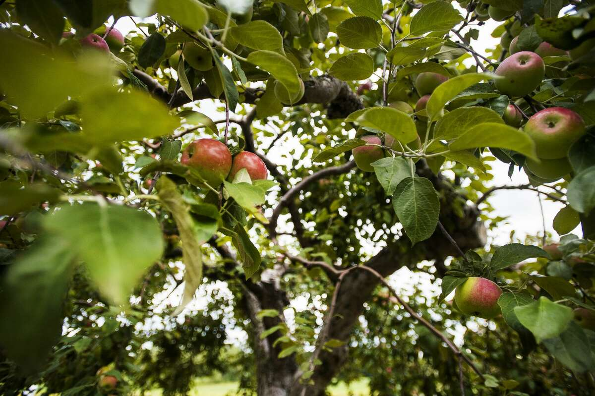 Visitors enjoy cider slush, donuts, outdoor activities and more Saturday, Sept. 5, 2020 at Leaman's Green Applebarn in Freeland.