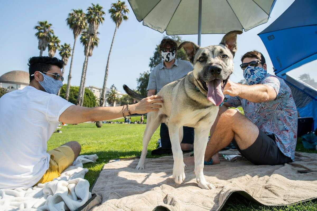 From left: Soheil Norouzi, Edward Sciaky and Tyler Pate hang out with Arlo the dog during the Labor Day weekend at Dolores Park, Saturday, Sept. 5, 2020, in San Francisco, Calif.
