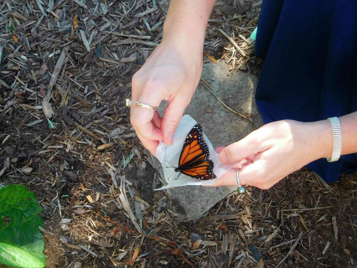 Munson Healthcare Hospice grief support holdsbutterfly release inFrankfort to help members with the grieving process. (Courtesy Photo/Vicki Carpenter)