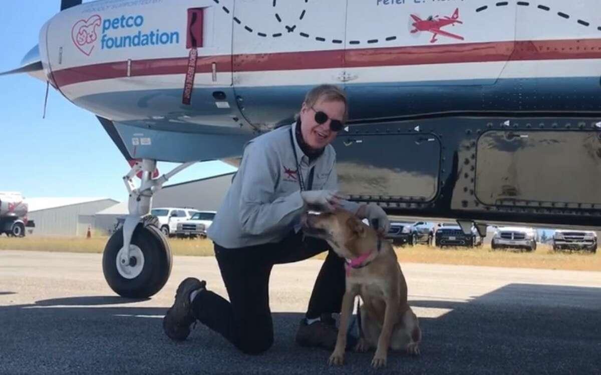 El fundador de la organización Dog Is My CoPilot Dr. Peter Rork es fotografiado junto a Patty, la mascota número 16.000 que ha sido rescatada por el programa durante un viaje a Laredo el jueves.