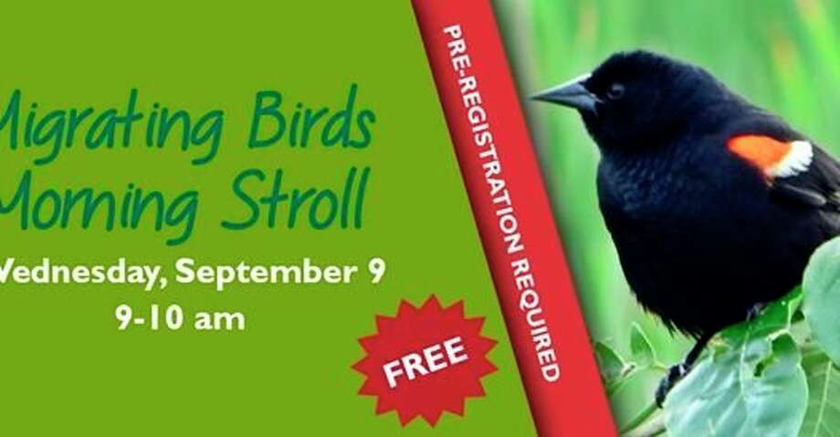 Wednesday, Sept. 9: Migrating Birds Morning Stroll is set for 9 to 10 a.m. at Chippewa Nature Center in Midland.(Photo provided/Chippewa Nature Center Facebook)