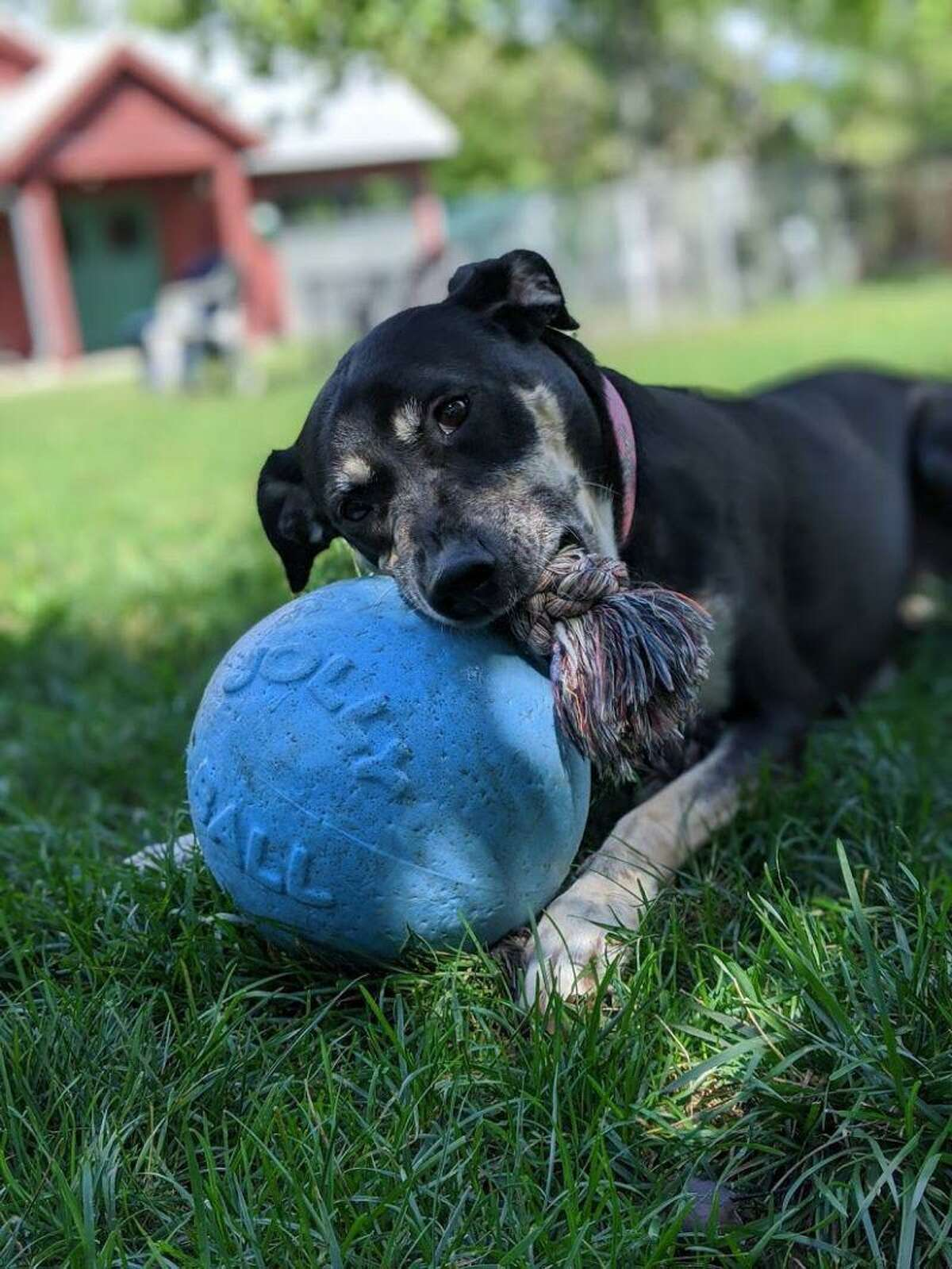 Lucy, a 7-year-old Rottie mix seeks a loving home.
