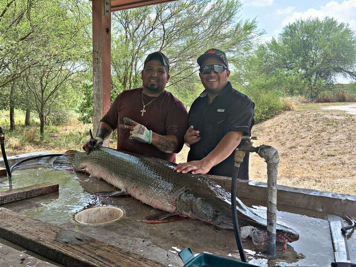 Two San Antonio anglers caught a 6-foot-5-inch alligator gar at Choke Canyon on Aug. 31.