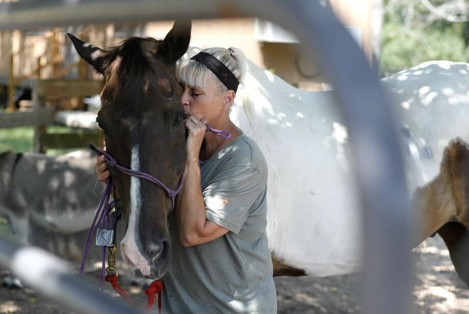 Navy veteran Regina Fulton shares a moment with her American Painter Horse, Fred, at Henry's Home, Tuesday, Aug. 18, 2020, in Conroe. The nonprofit organization, which provides equine therapy sessions for veterans, is partnering with Tri County Behavior Health to help veterans with various health services. Photo: Jason Fochtman/Staff Photographer / 2020 © Houston Chronicle