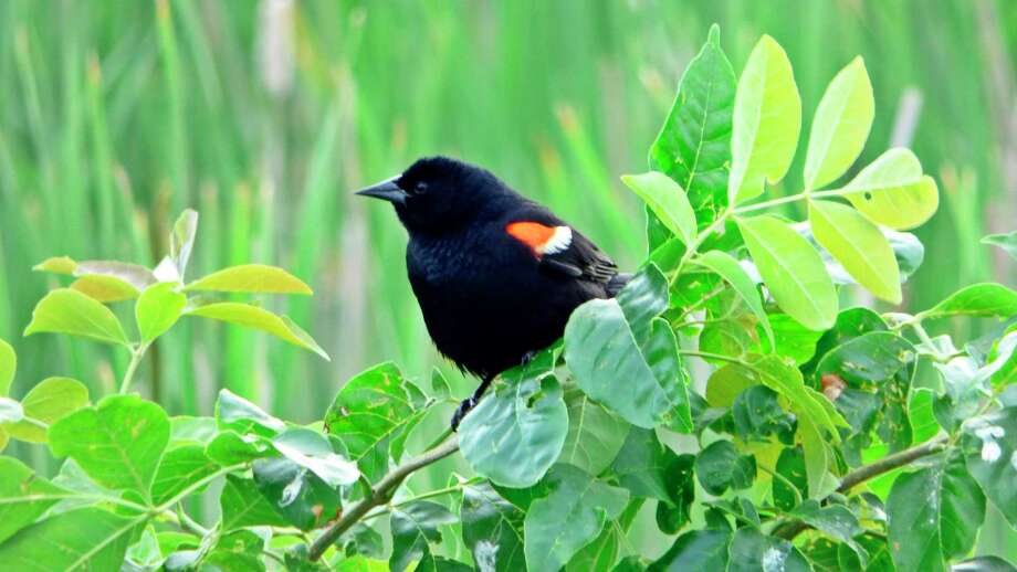 Wednesday, Sept. 9: Migrating Birds Morning Stroll is set for 9 to 10 a.m. at Chippewa Nature Center in Midland. (Photo provided/Chippewa Nature Center)