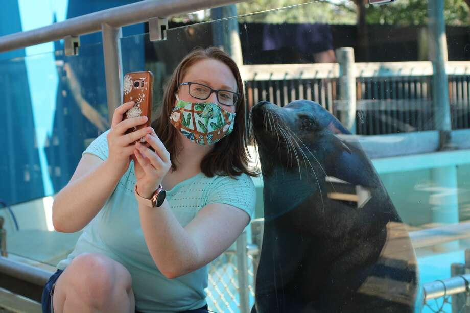 You can collaborate with a sea lion on an original piece of art to take home or opt to play ball or frisbee with the marine animals. Photo: Colleen Cavanaugh/Houston Zoo