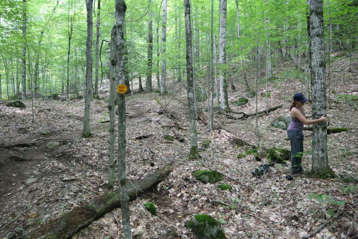 Courtney Garrity, a field crew member with the Wildlife Conservation Society, puts up a wildlife camera near the trail to Rooster Comb Mountain on Aug. 24 in Keene.