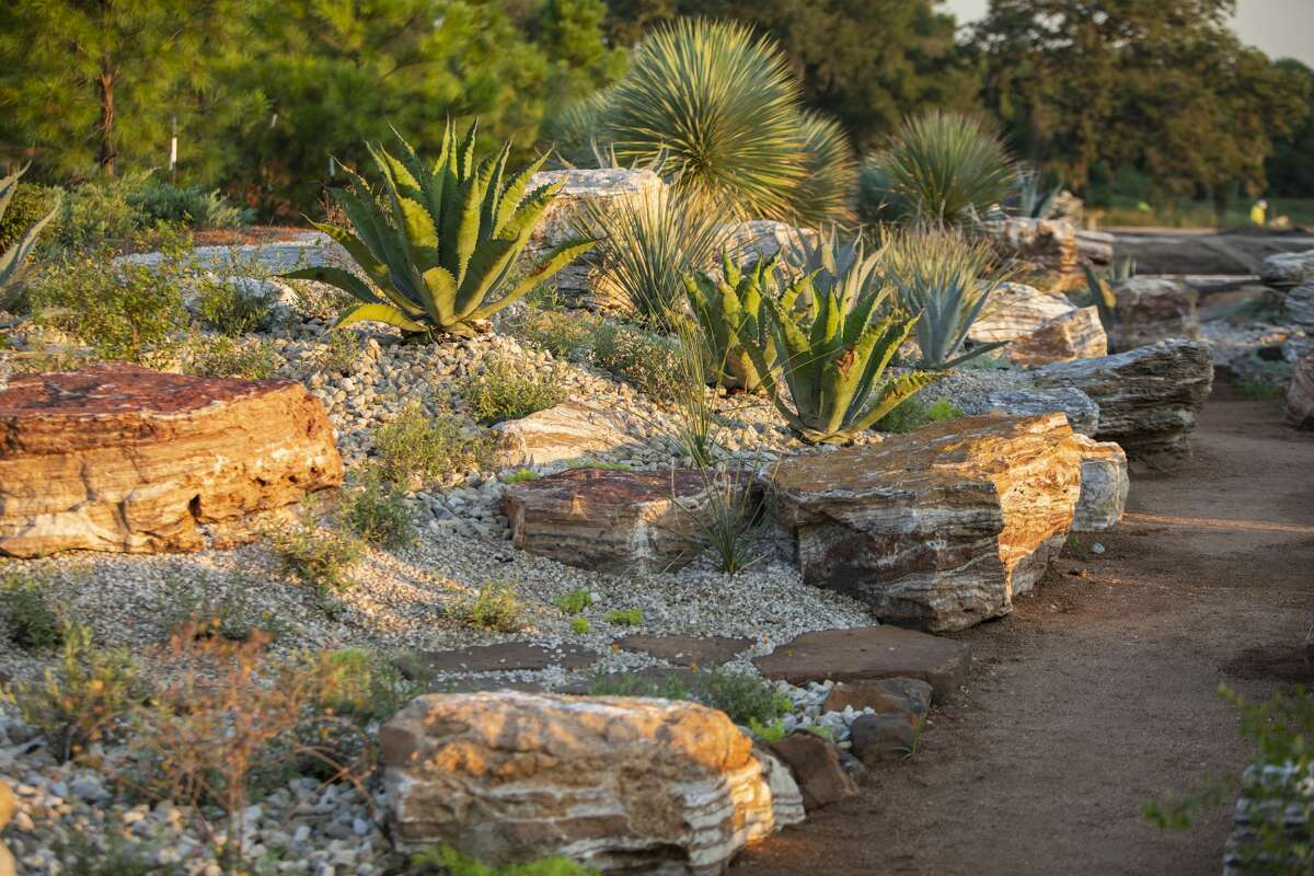 The Arid Valley of the Global Collection Garden create a dramatic contrast to the adjacent tropical and shady subtropical sections. Sparsely scattered drifts of grasses and a variety of succulents growing among boulders dominate under the full sun.