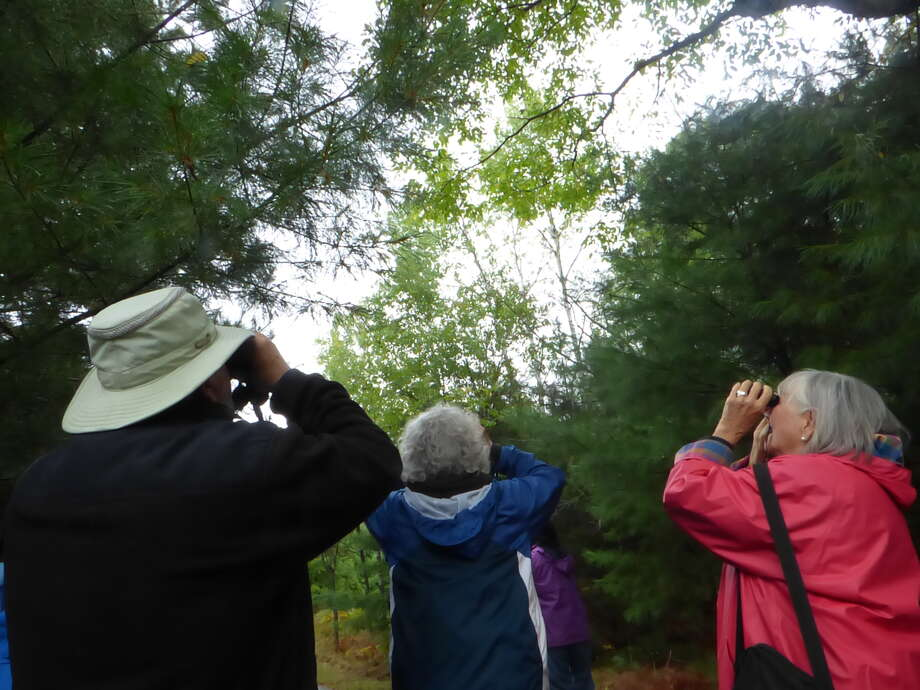 Bird watchers look to the forest canopy at North Point Park on Sept. 10, 2020. Work is being done at the park to create an even more thriving habitat for birds. Photo: Scott Fraley/News Advocate