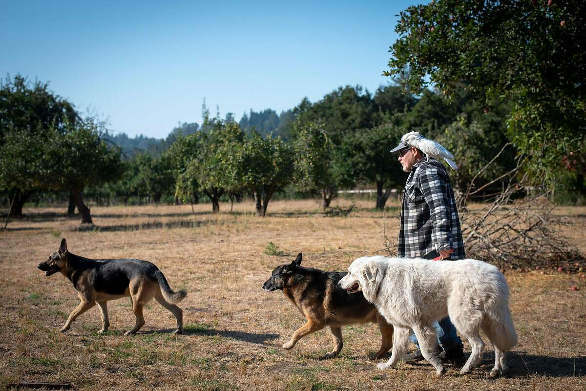 Michael Matison savors time with his three dogs (Dakota, Teagan, and Diesel) and his cockatoo Kazar at his friend's home in Aptos on Sept. 4, 2020. The CZU Lightning Complex Fire engulfed the property that Matison and his partner Mikaela on Last Chance Road without warning, cutting off their exit on the main road and forcing them to gather their animals and head out into Big Basin, which was also on fire.