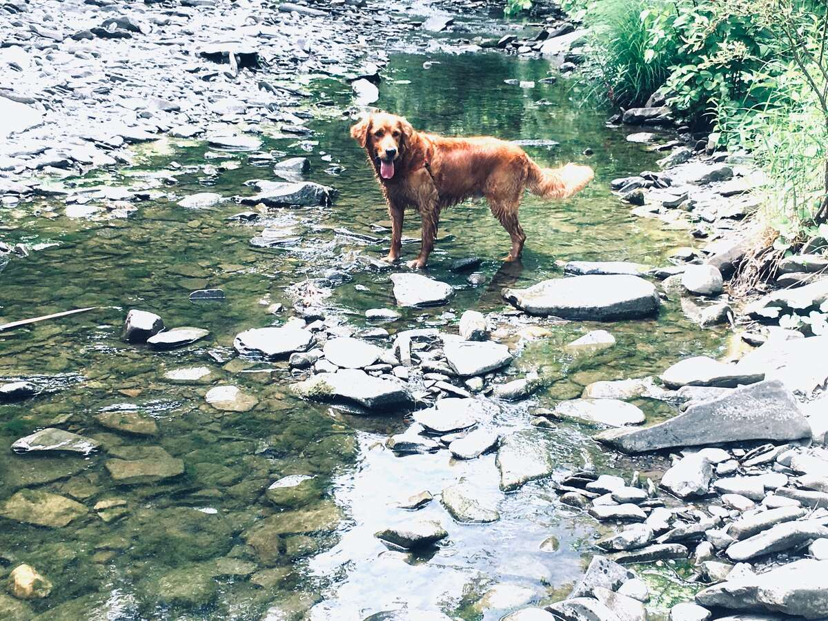 Remi cools off this summer, from Mike Pisciotta