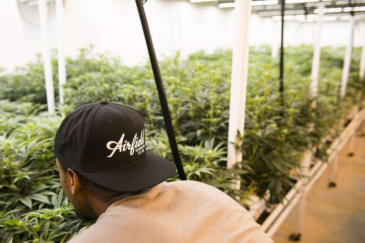 Marc Matulich, owner of Airfield dispensary in San Jose, navigated his 10-year-old San Jose dispensary through the choppy conditions of the California cannabis industry and now the pandemic.