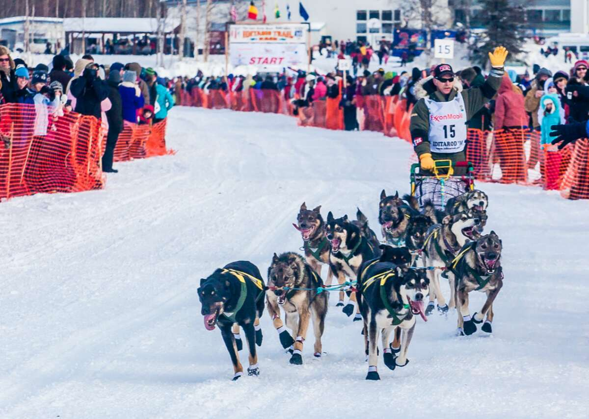 1973: The world's most famous dog race begins In 1973, mushers competed in the inaugural installment of what's known as