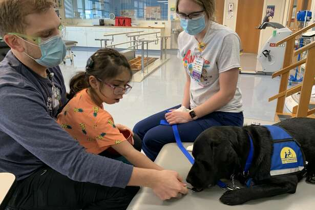 Declan, a 2-year-old Labrador Retriever, will help patients cope with hospitalization and reach their recovery goals.