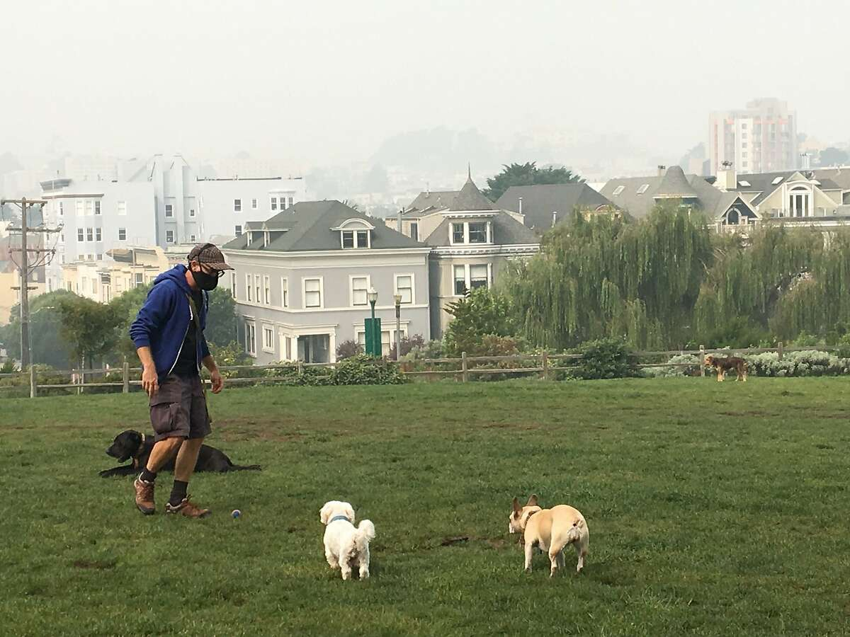 Michael Waddell, a professional dog walker, out in Alamo Square Friday. He said the loss of dog-walking business has caused him more stress than the recent meteorological calamities.