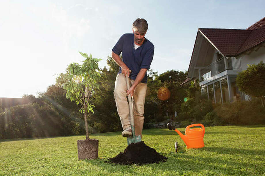 When planting, the tree's root flare should always be at or slightly above the soil surface. Photo: Getty Images