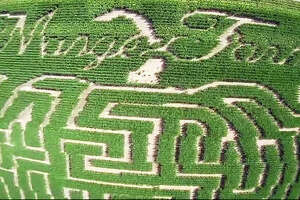 An aerial view of DeMange Corn Maze and Pumpkin Patch, cut by sixth-generation farmer Eric DeMange. The maze is located at 1205 Cypress Road, in St. Jacob. Sturdy walking shoes are recommended and a jacket, especially on cool nights.