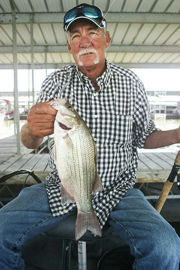Fall is the best time of year to put together a stringer of really nice white bass. Photo: Curt Hicken / For The Telegraph
