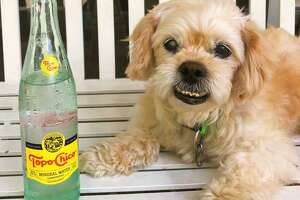 Two of writer Craig Hlavaty's favorite things: his dog and his Topo Chico.
