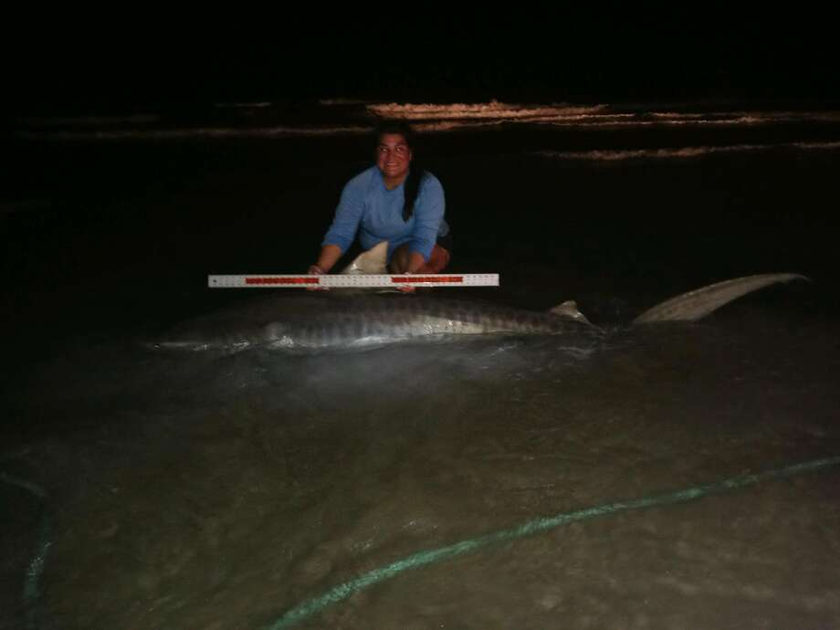 Josie Silva from Orange Grove reeled in a 9-foot, 300-pound female tiger shark from the shoreline near Bob Hall Pier on Labor Day. Photo: Josie Silva