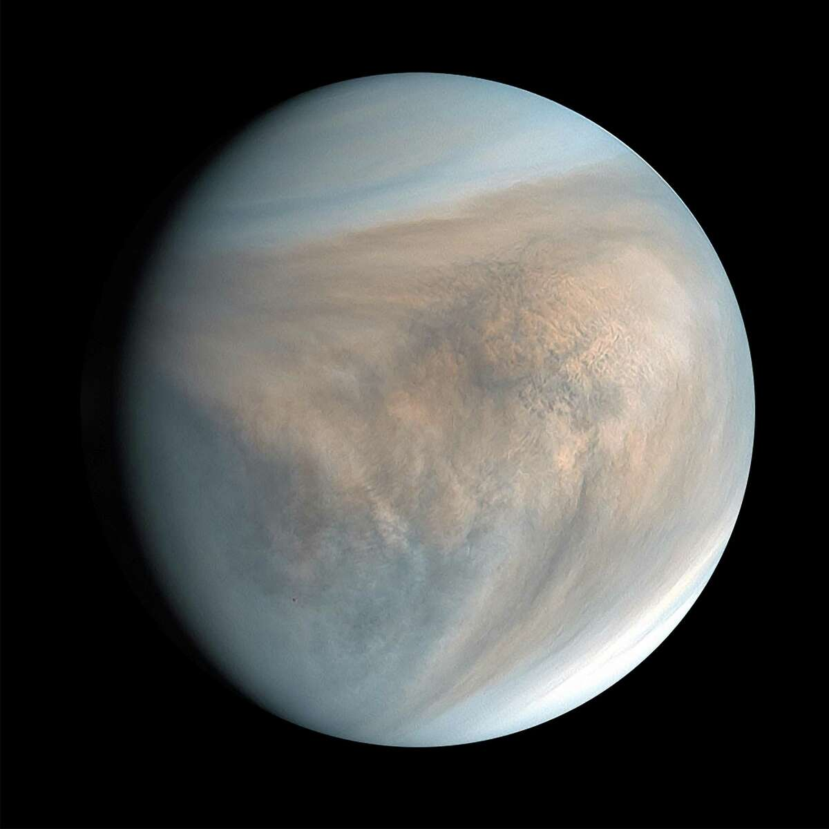 An image of Venus, made with data recorded by Japan's Akatsuki spacecraft in 2016. So close, so similar and very mysterious, the planet is surprising scientists with a chemical signature spotted in its clouds. (PLANET-C Project Team/JAXA via The New York Times)