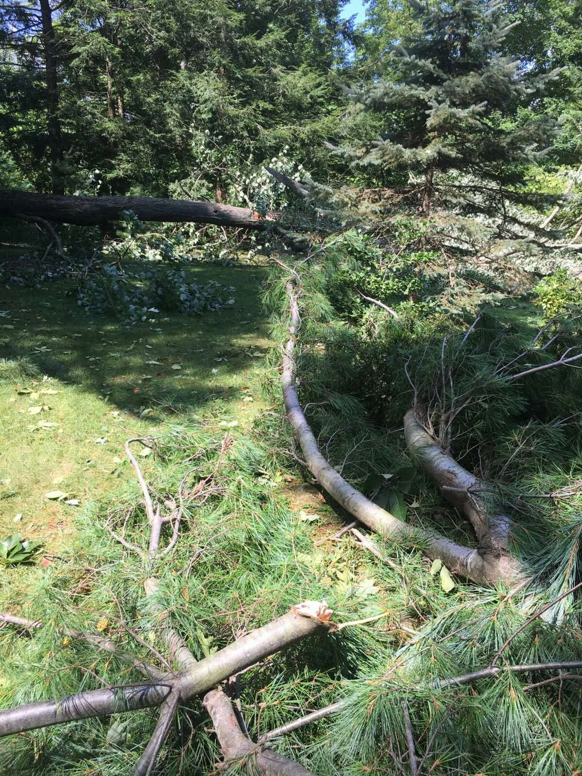 Trees lie in pieces after Tropical Storm Isaias on Aug. 4, 2020.