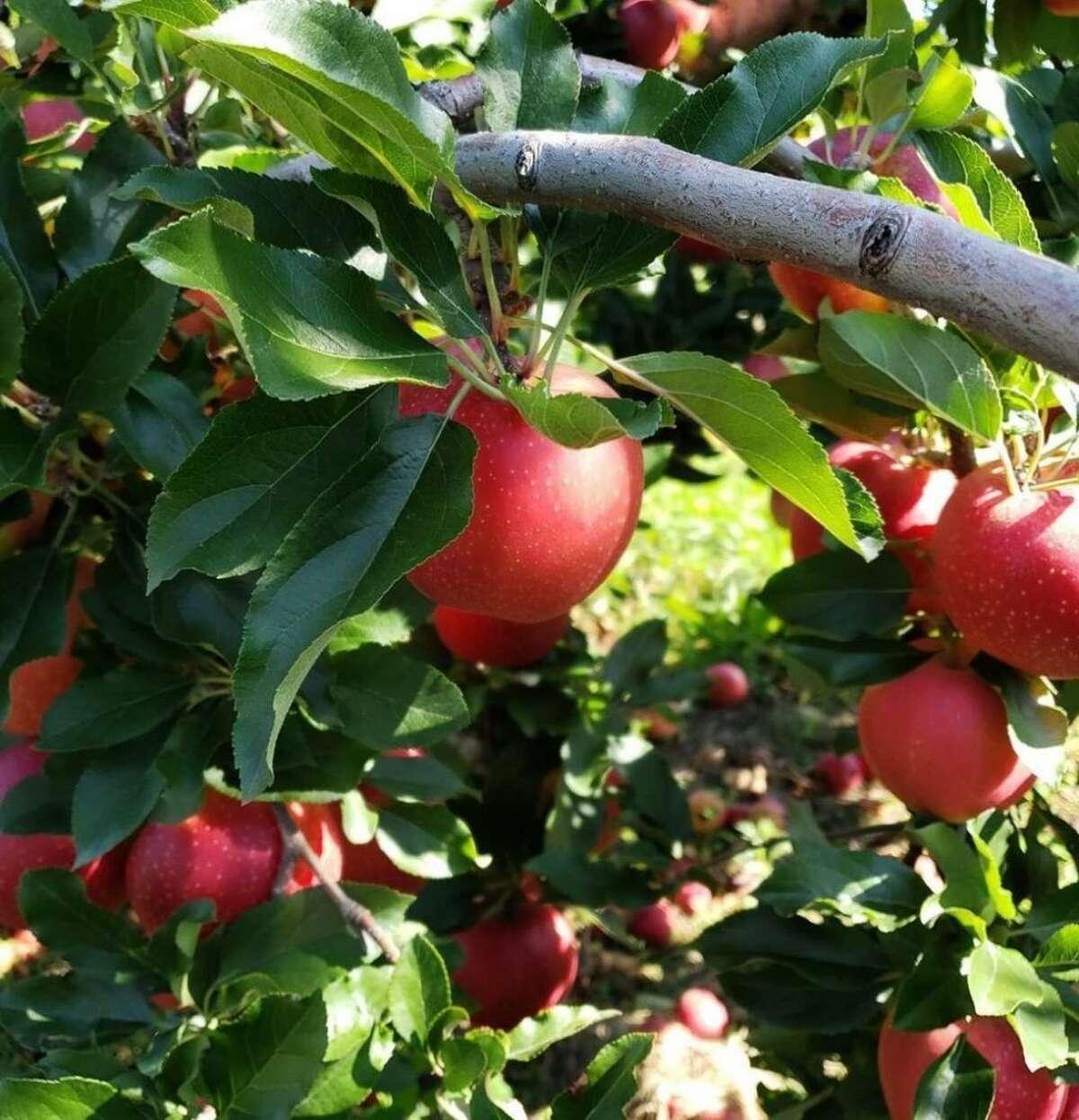 Fall apples make for an easy apple slaw.