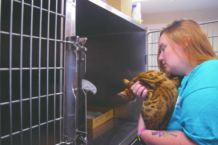 Colleen Nelson, a volunteer for Jacksonville's Protecting Animal Welfare Society, interacts Tuesday with a newly rescued cat. Photo: Samantha McDaniel-Ogletree | Journal-Courier