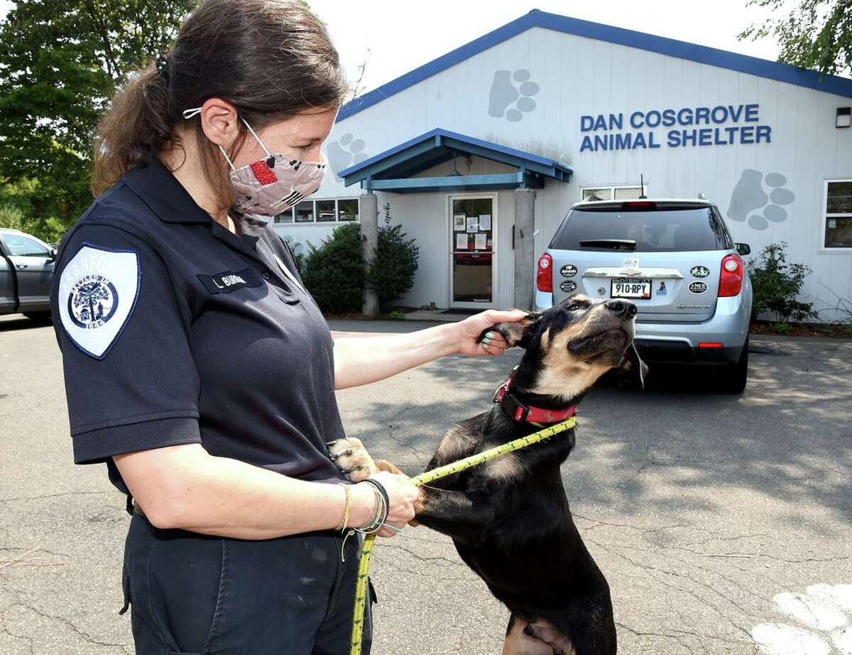 Laura Burban, Director of the Dan Cosgrove Animal Shelter, takes 7-month-old Rambo for a walk in Branford in August.