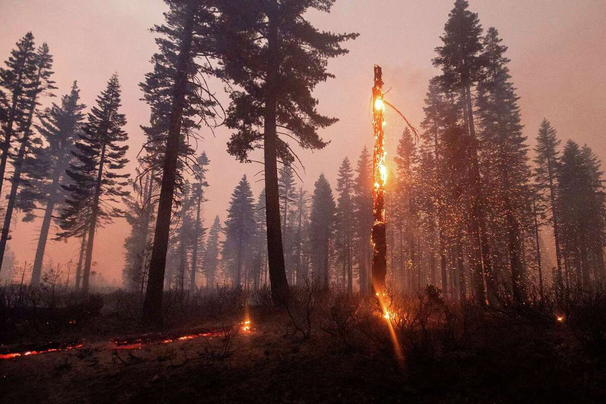 A tree casts embers as the North Complex Fire burns in Plumas National Forest, Calif., on Monday, Sept. 14, 2020. (AP Photo/Noah Berger)