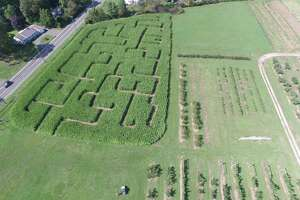 A veritical view of the corn maze at Rose Orchards in North Branford.