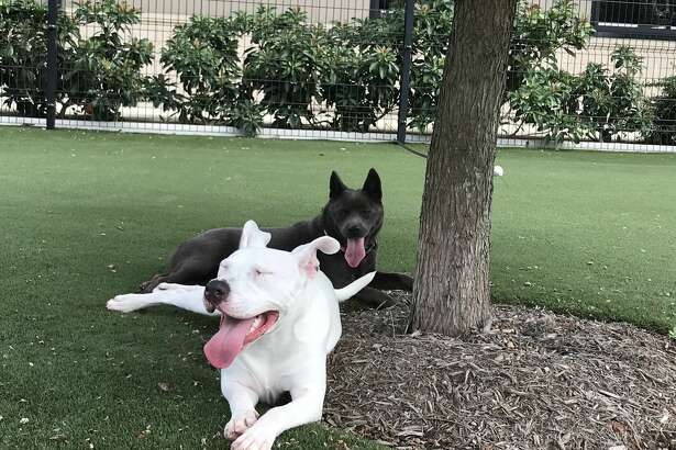 Whisper and Sassy are reunited at the Houston SPCA on Monday, Sept. 14, 2020.