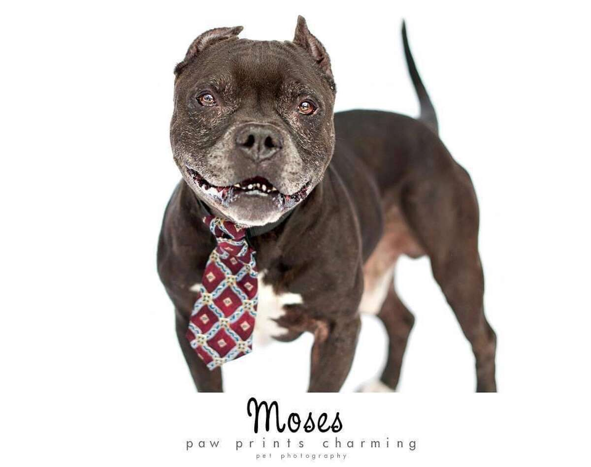 Chris and Mariesa Hughes run the Mr. Mo Project, a not-for-profit dog rescue based in Clifton Park. The organization is named after their late dog Moses.