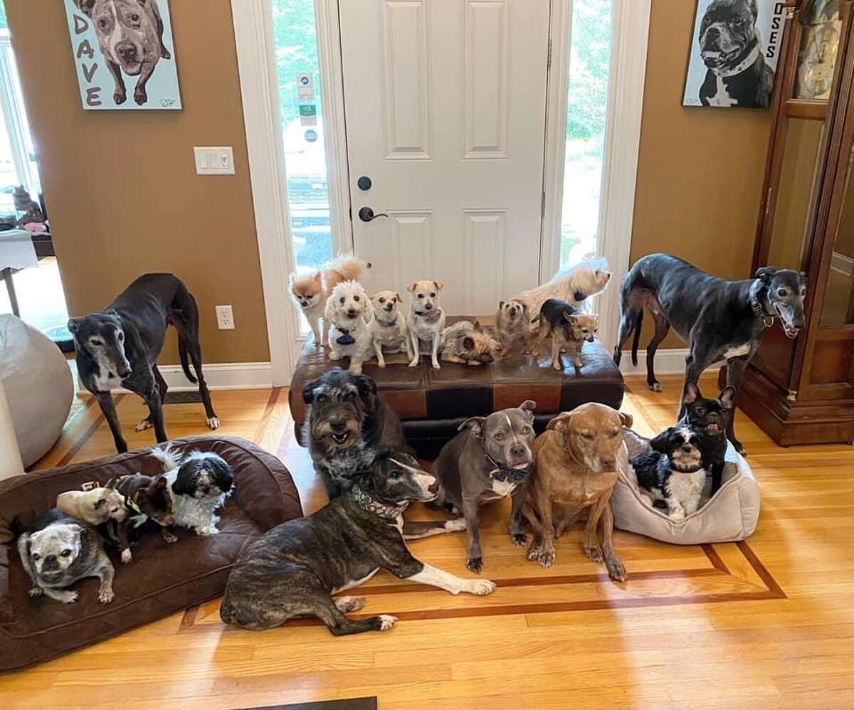 Chris and Mariesa Hughes run the Mr. Mo Project, a not-for-profit dog rescue based in Clifton Park. They have 21 dogs in their home.