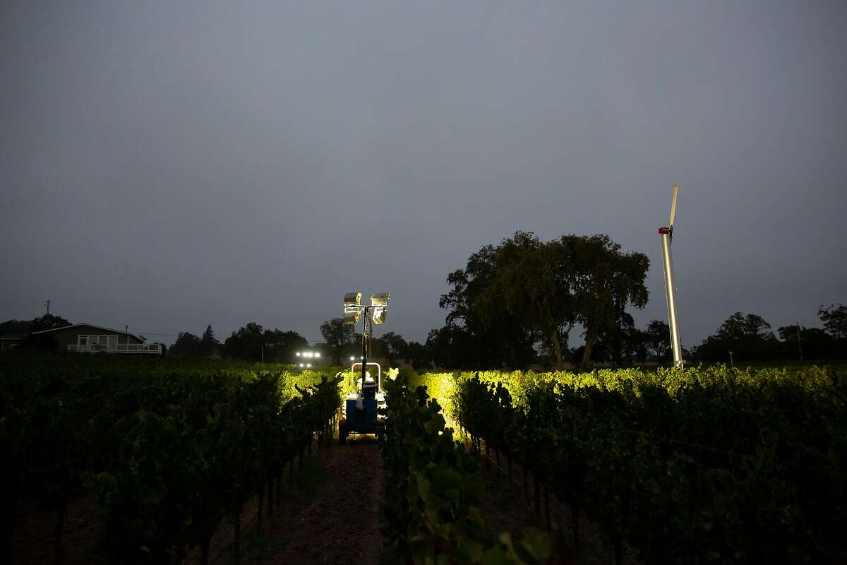 Workers are illuminated by lamps on tractors as they harvest Chardonnay grapes at Bricoleur Vineyards in Windsor, Calif. on Tuesday, August 27, 2020. Both California wild fires and Covid-19 have had an impact on vineyard harvests this year, but most particularly concerns over smoke taint from the wildfires burning in large portions of Northern California. Thin-skinned grapes, such as the Pinot Noir grape, are particularly at risk of smoke contamination, though the more traditional reds including Cabernet Sauvignon, Syrah and Petit Syrah are also at risk due to their need to stay on the vine longer and therefore be exposed to the smoke for a longer period of time.