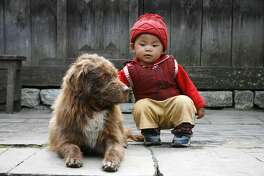 Introducing a new pet to a baby takes caution for parents and pet owners.