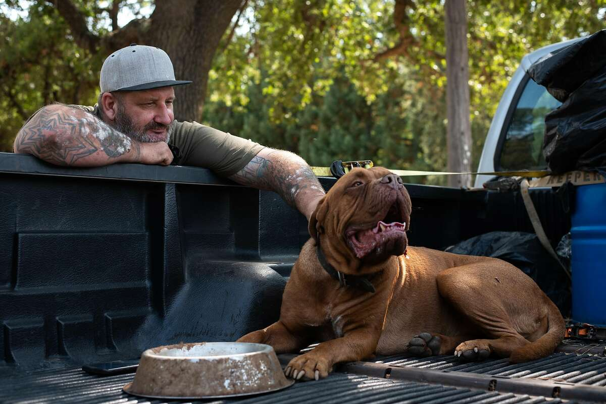 Chris Woolf watches his 4-year-old mastiff Sir Anthony Brutus Brewcephus II (BruTwo for short) in the back of his truck in San Martin on Sept. 17, 2020. Woolf, a former Navy medic and Burning man ranger, waited until the last possible moment to pack up his truck and evacuate his home in Butte County after the North Complex Fire swept through the area. BruTwo has never left the property and is now showing signs of anxiety being away.